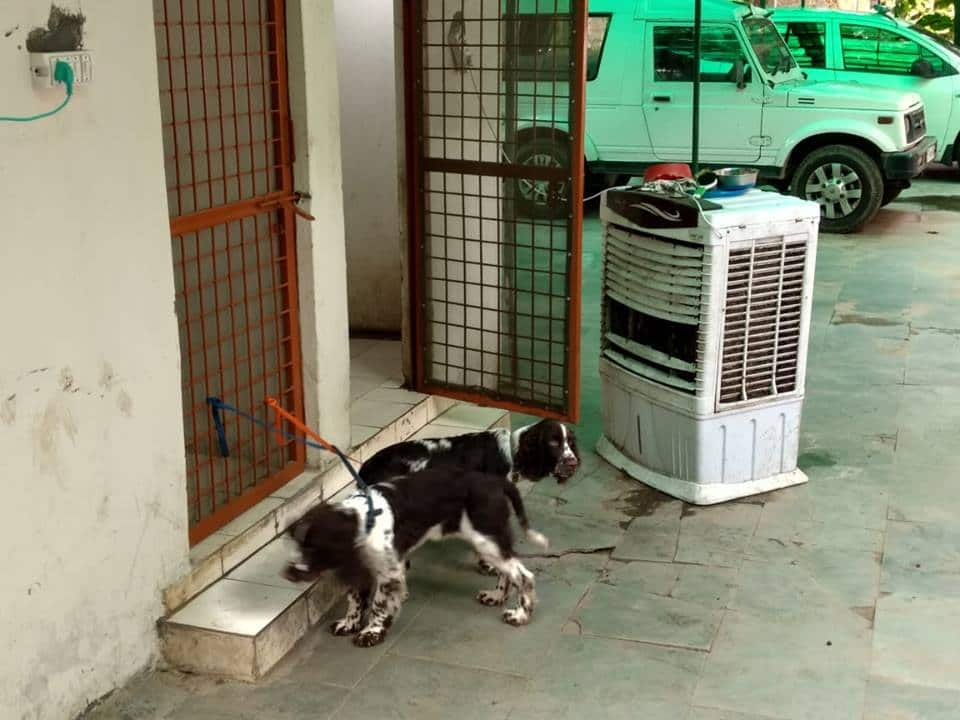 Office space becomes home for IPS officer's pet dogs in Delhi