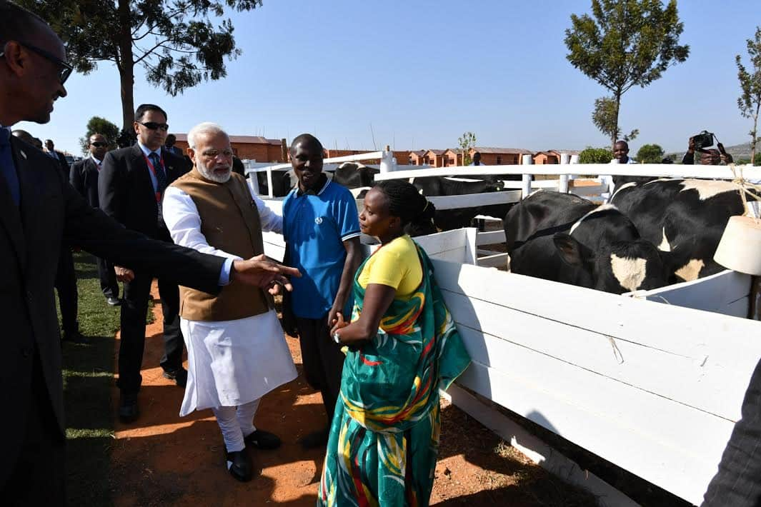 Why PM Narendra Modi gifted 200 cows to a ramshackle village in Rwanda?