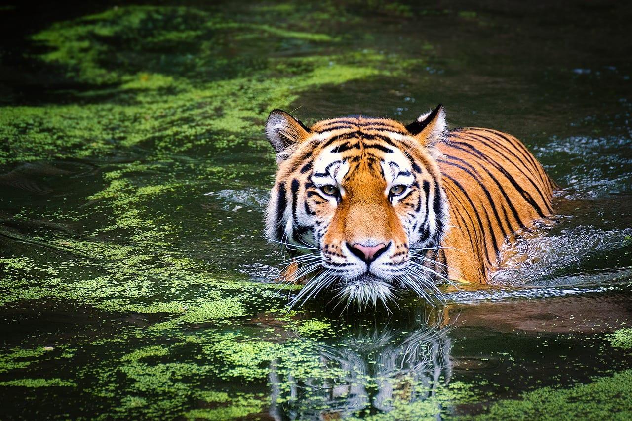 Bihar man's half-eaten body found in Rajaji tiger reserve