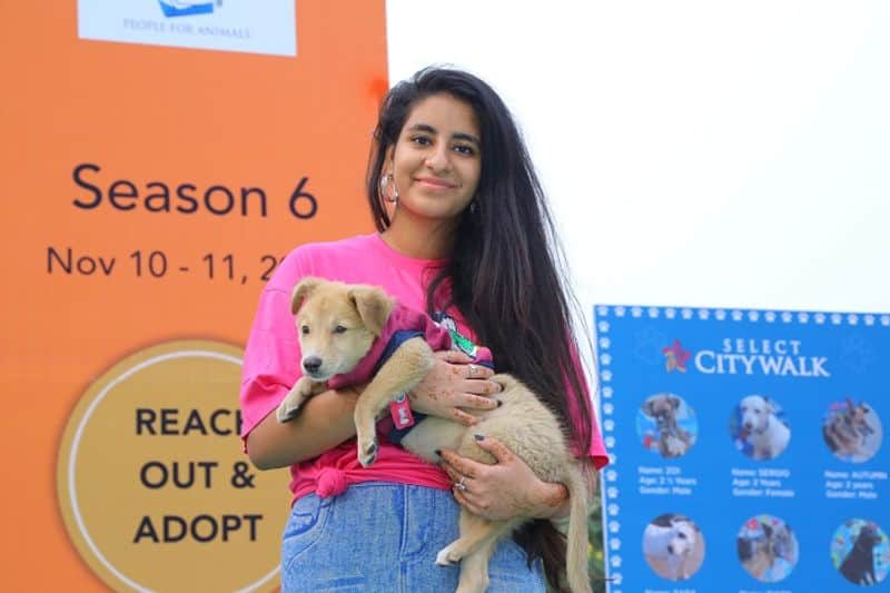 Delhi Cause For Paws Maneka Gandhi Select Citywalk homeless dogs