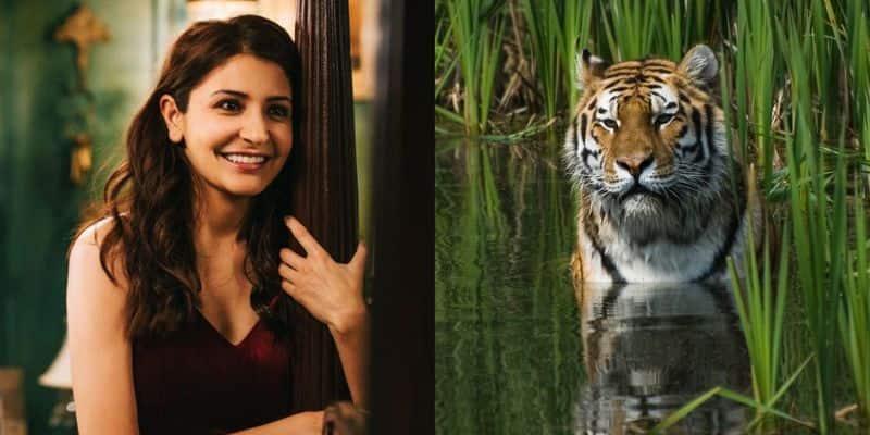 Anushka Sharma tigers  Discovery World Wildlife Fund WWF Project C.A.T