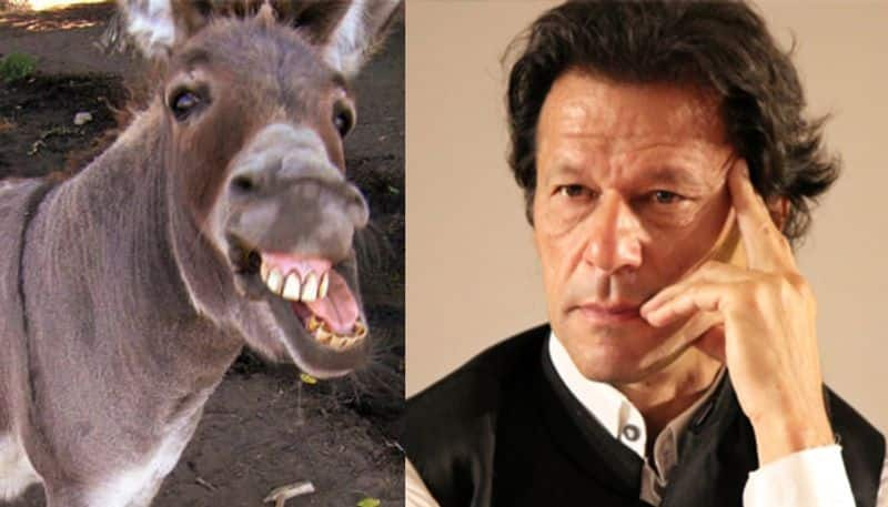 Massive rise in donkey count in Pakistan China wants them too E'jiao