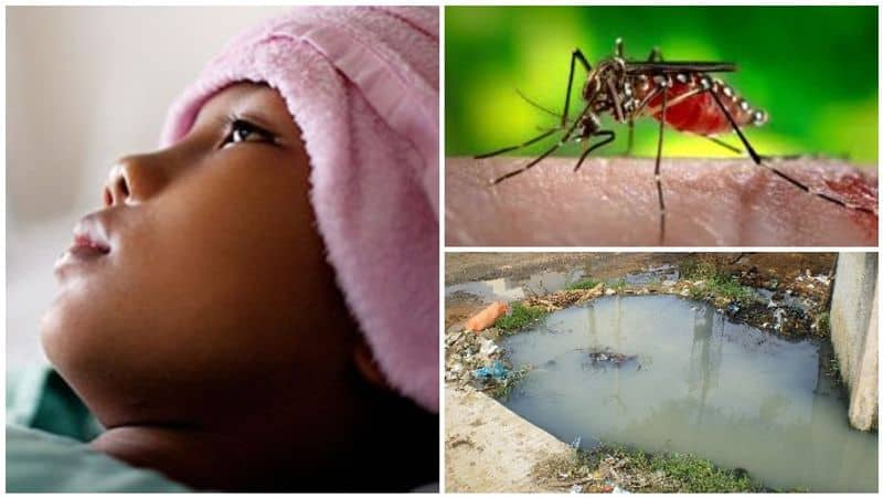 National Dengue Day Here are some tips prevent dengue viral infection