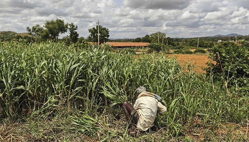 How to solve the puzzle of farm loan waivers
