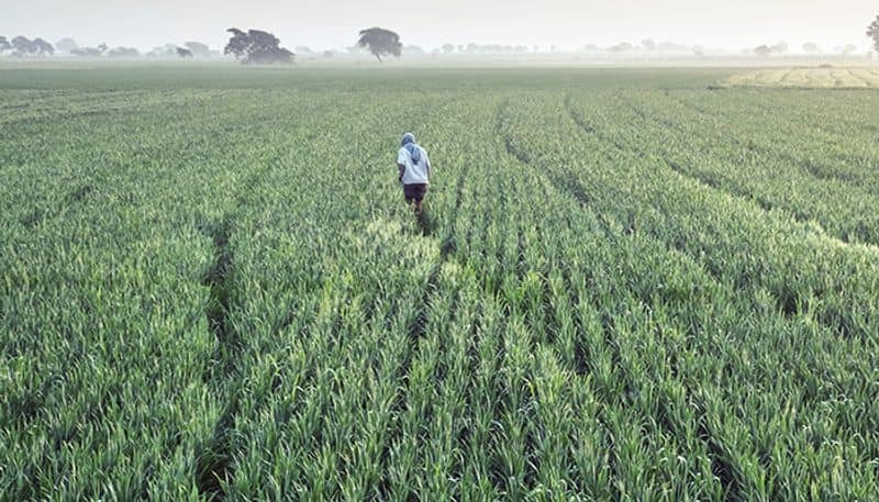 Good news for farmers: Rajasthan's farmers will not seize land if they do not repay their