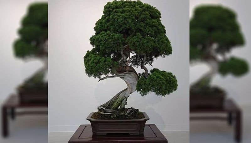 Farmer earned millions from Bonsai Bagia, example for others