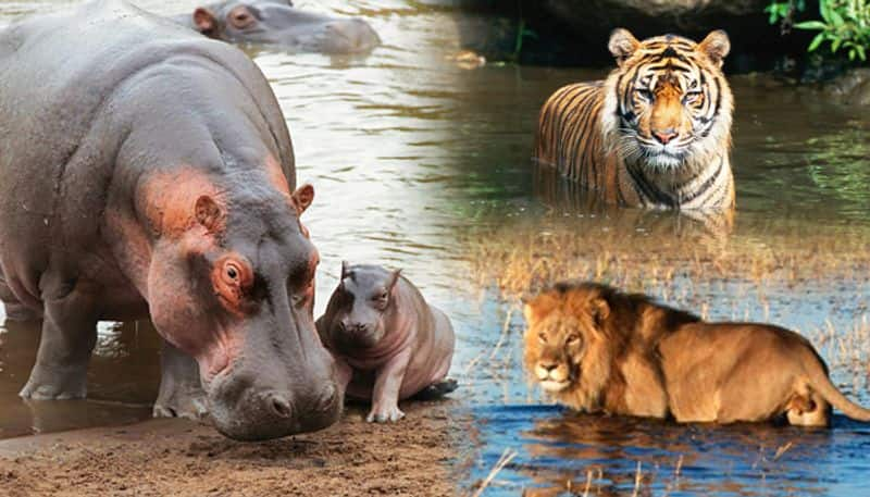 water scarcity hits bengalurus bannerghatta biological park