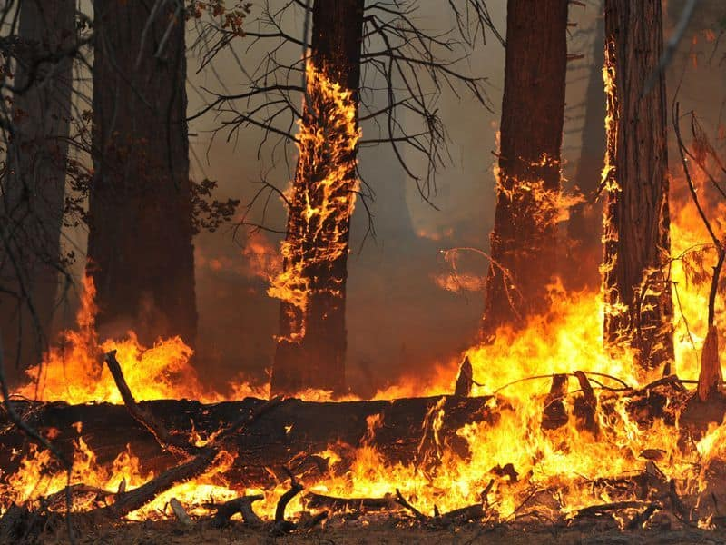Bandipur forest: Two shepherds held for setting fire