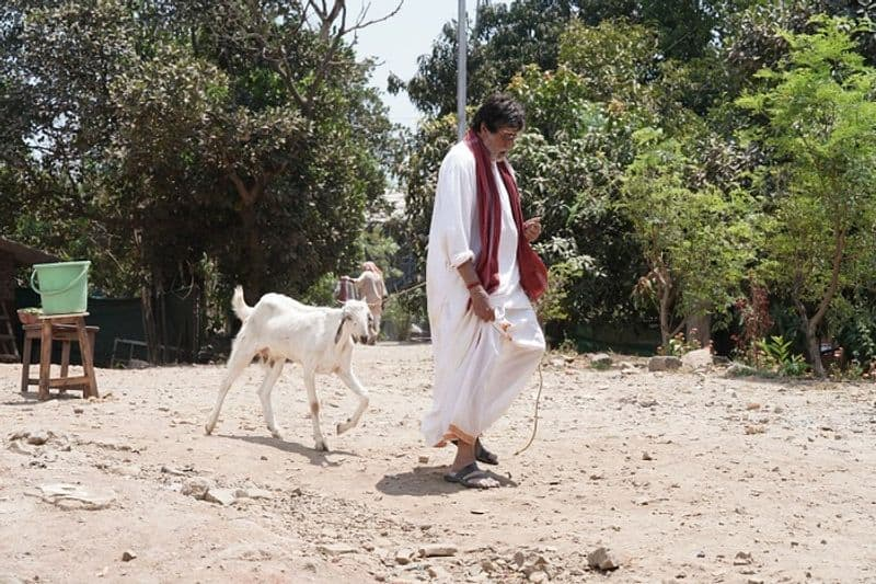 Amitabh Bachchan walk with Goat picture goes viral