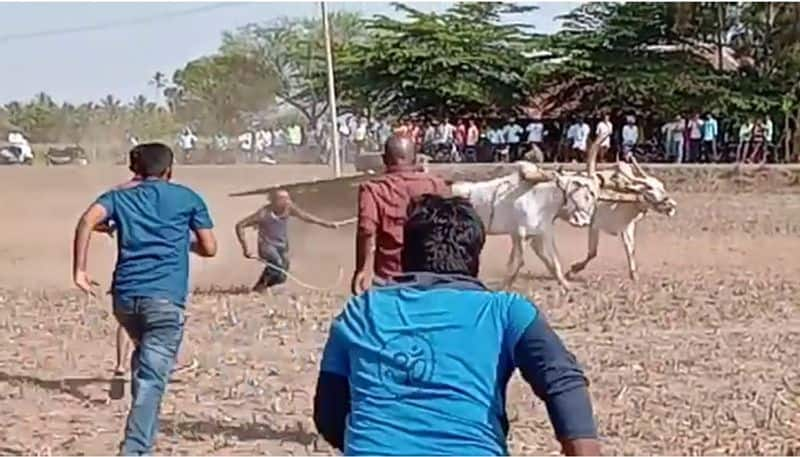 Man Miraculously Escape As Bullock Cart Topples in HAssan