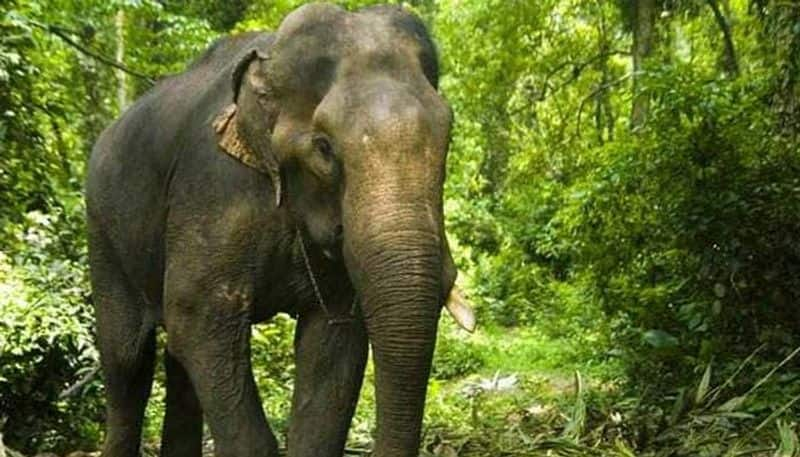 Elephant picks up man defecating in open, runs around with him