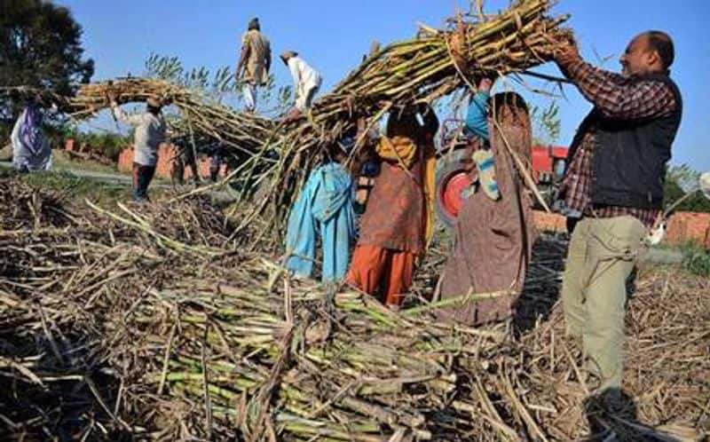 Good news for sugarcane farmers, all sugar mills will start crushing in UP by November 15