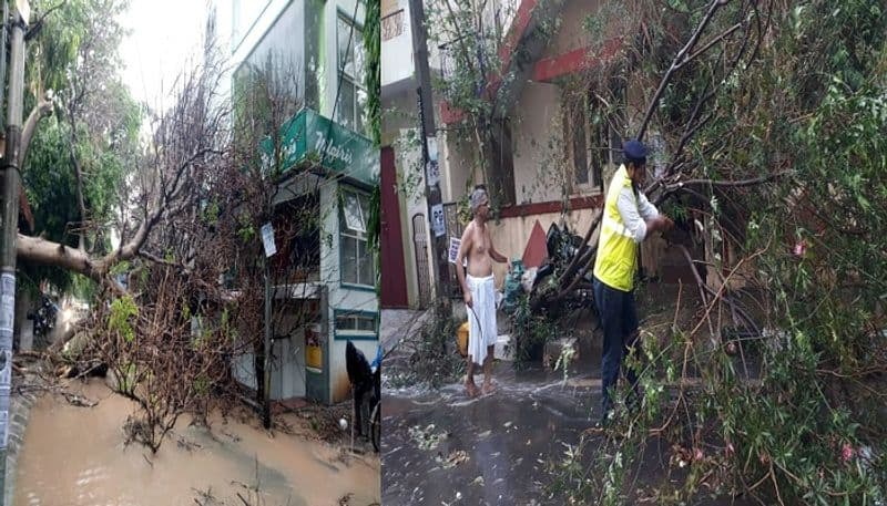 Biker killed after a tree fell on him due to heavy Rain in Bengaluru