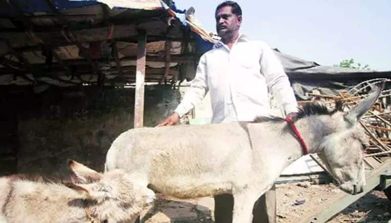 When donkeys carried EVMs to remote polling booths in Tamil Nadu