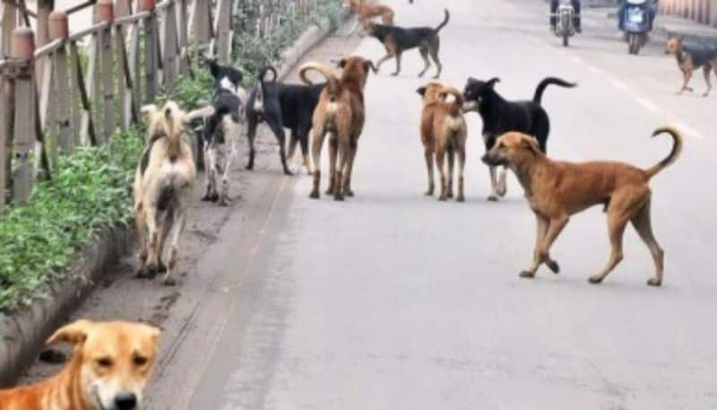 Stray Dog attack on 10 year child in Davanagere mah