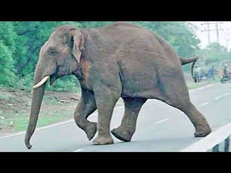 elephant in  shoping bazaar
