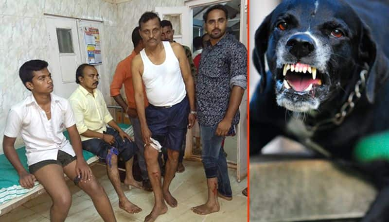 Dog attacks continue in Karnataka: 20 injured in Hubballi; 6 sheep killed in Kolar