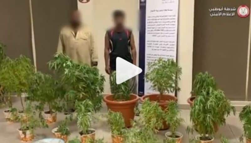 bangalore students cultivate cannabin in house