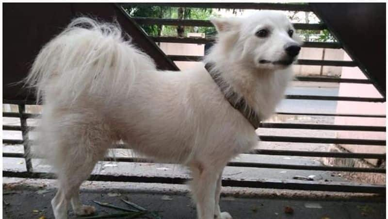 Kerala Pet abandoned for Illicit relationship with neighbour dog
