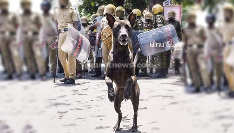 thankful dog picture shared on janamaithri police facebook is viral