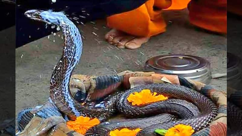 Nag Panchami today, rare yoga will be released