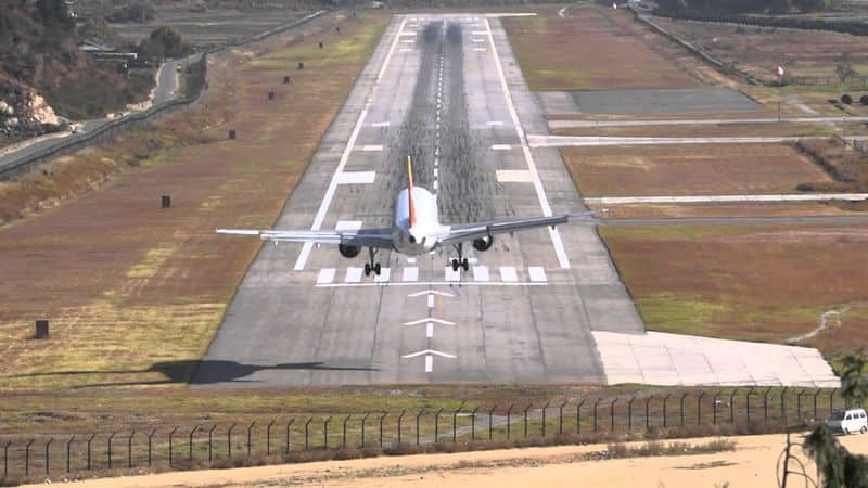 Pilots are upset with dogs in Goa, dogs running on runway