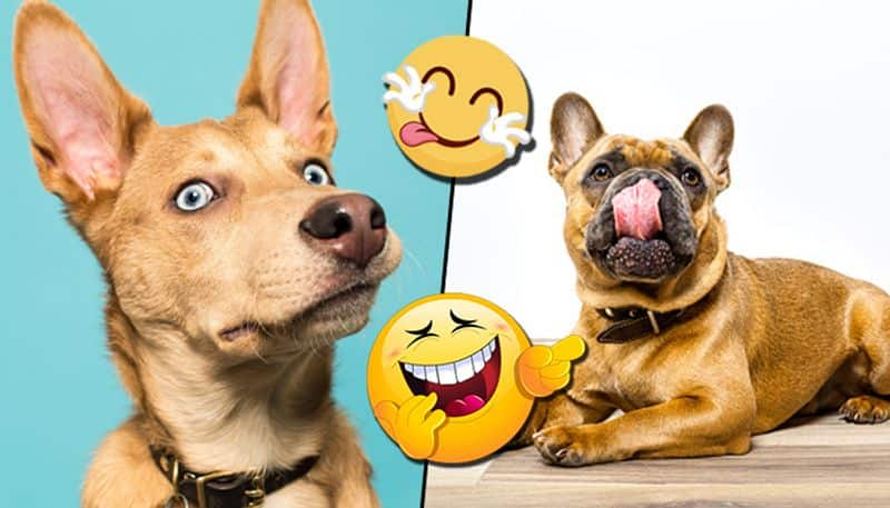 International Dog Day: Canines caught in reaction by hoomans
