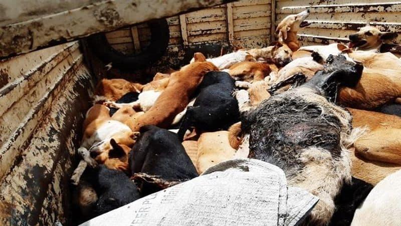 Maharashtra: Stray dogs found dead with legs, muzzles tied