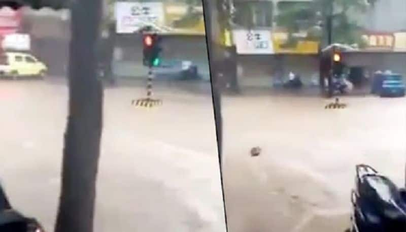 Viral video: Traffic stranded but signal floats due to heavy rains in Mumbai