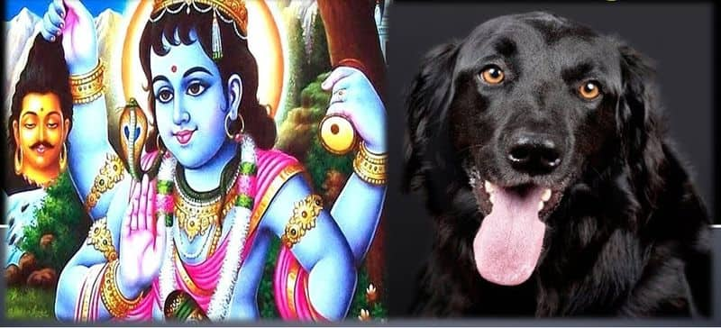 Know how Lord Shiva changed the law of enlightenment for a small dog and included it in his ganas