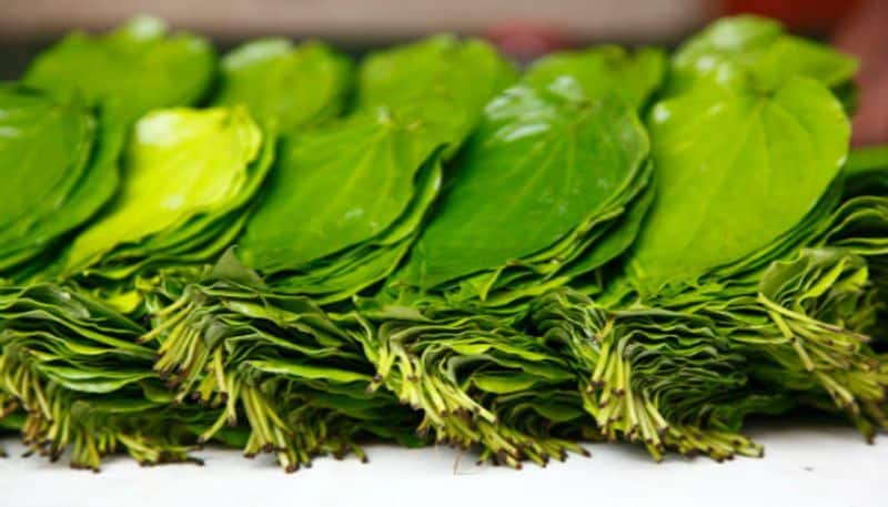 Some beauty benefits of betel leaf for skin and hair