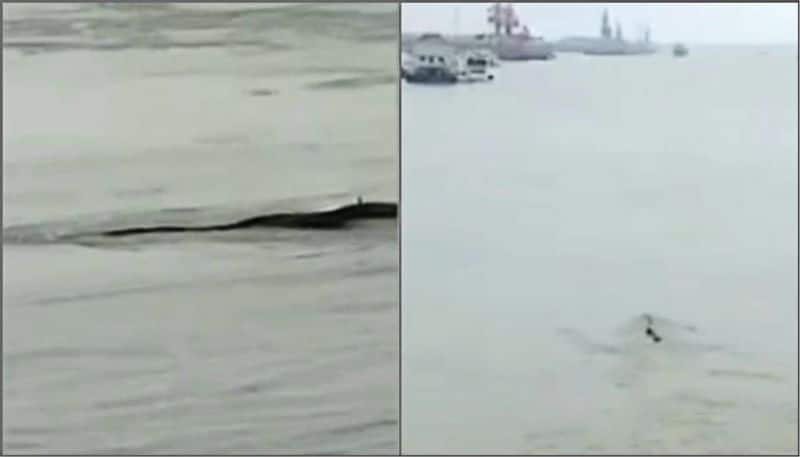 Mysterious 65-Foot 'Monster', Spotted In China