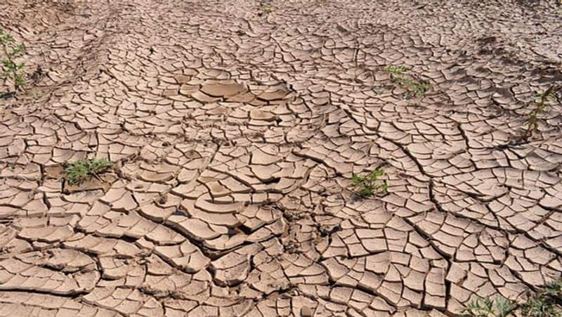 2020 is likely to be the hottest year