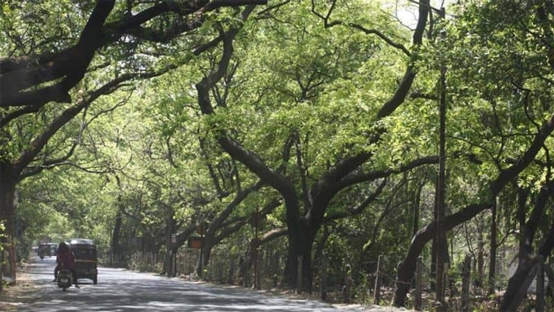 Bombay High Court dismissed the petitions filed against cutting trees of Aarey forest.