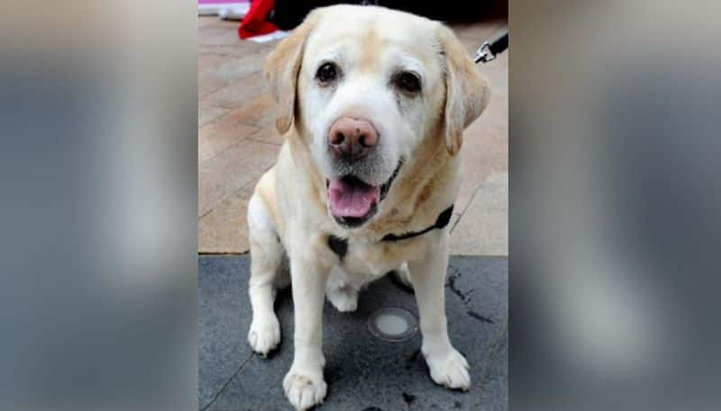 Indore Police arrest a dog along with owner on charges of breaking Covid protocol ckm