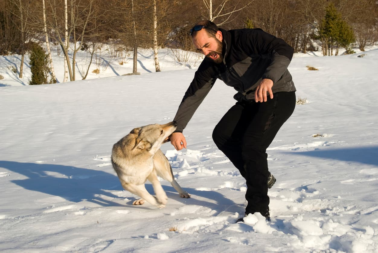 Survival Guide Things you should do if a stray dog attack
