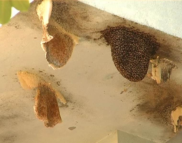 Honey Bees are In Trouble