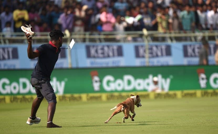 Who was chasing me with a shoe the Vizag dog tweeted