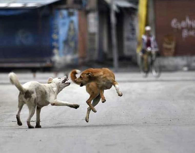 dogs eat away infant body