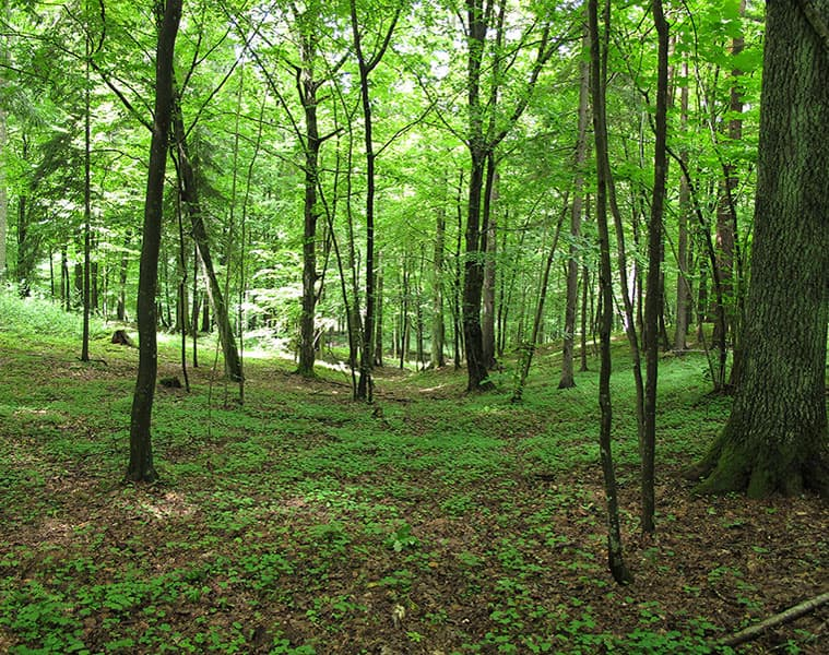 How Maharashtra is using technology to increase forest cover