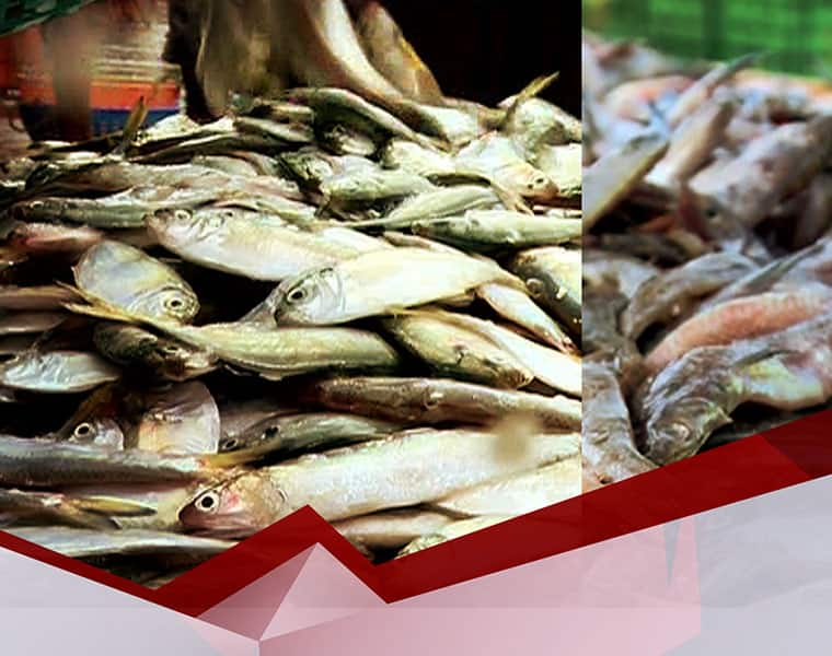 This Fish is more delicious than Hilsa fish bpsb
