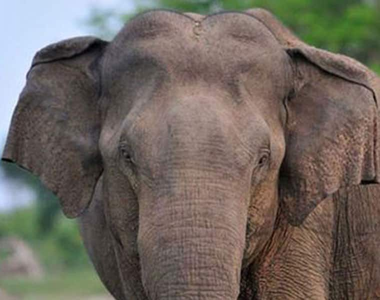 State Govt propose to Central for Financial Assistance to Elephant Carridar