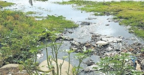 madurai HC ordered that plans that allow sewage water into tamirabarani should be banned