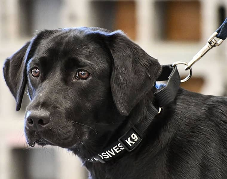 Sniffer dogs exhausted from prolonged duty during election season: SPG lays down strict rules