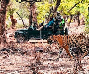 World Tiger Day: A trip to Ranthambore and up close and personal with the majestic predator