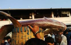 Fisherman caught a Ghol. Get's rich