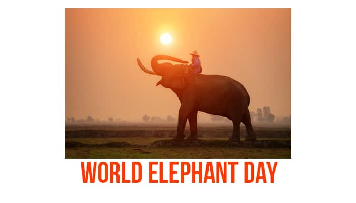 World Elephant Day: 6 things you must know about this annual event in celebration of the pachyderm