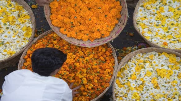 Farmers destroy Flowers due to Lack Of demand in chikkaballapur snr