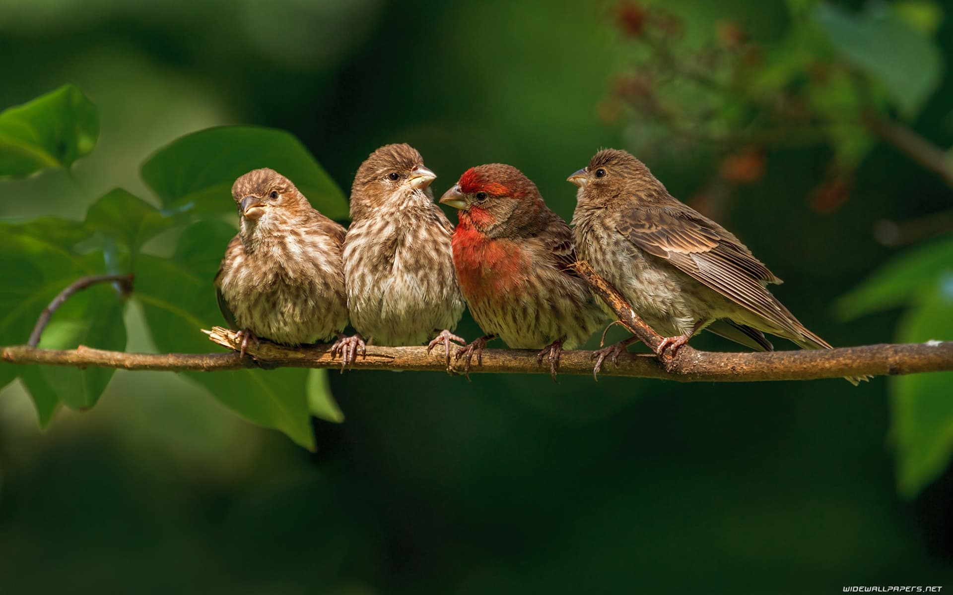 FROM SOUND POLLUTION BIRDS LIFE GET EFFECTED