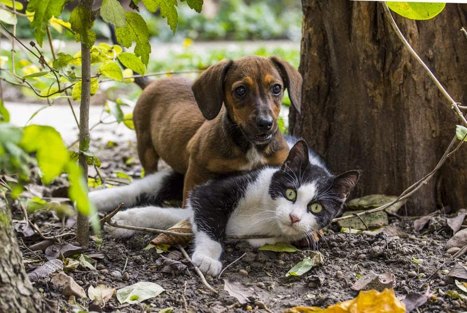 US house of representative passes bill prohibiting people from eating dogs and cats